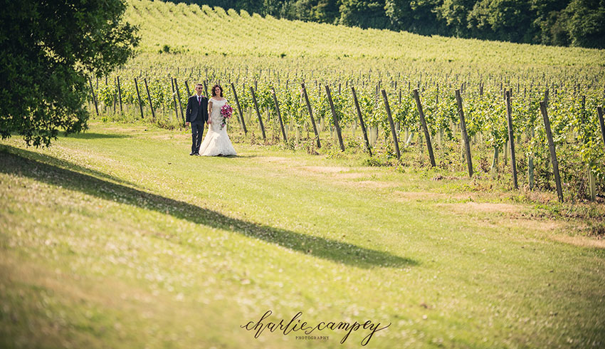 A wedding couple walking along the vineyard at Denbies Wine Estate